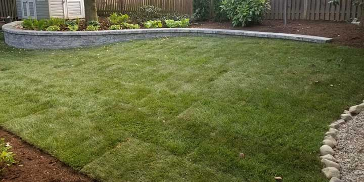 Sod installation project in McLean, Virginia.